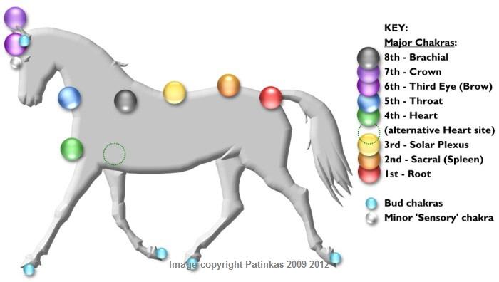 Horse Chakras - Copyright © Patinkas 2009