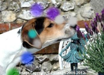 Le chakra sensoriel du chien en action!