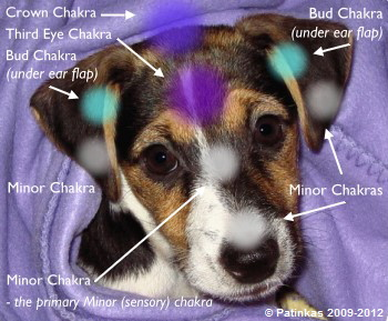 Visage de chien chakras - Copyright © Patinkas 2009